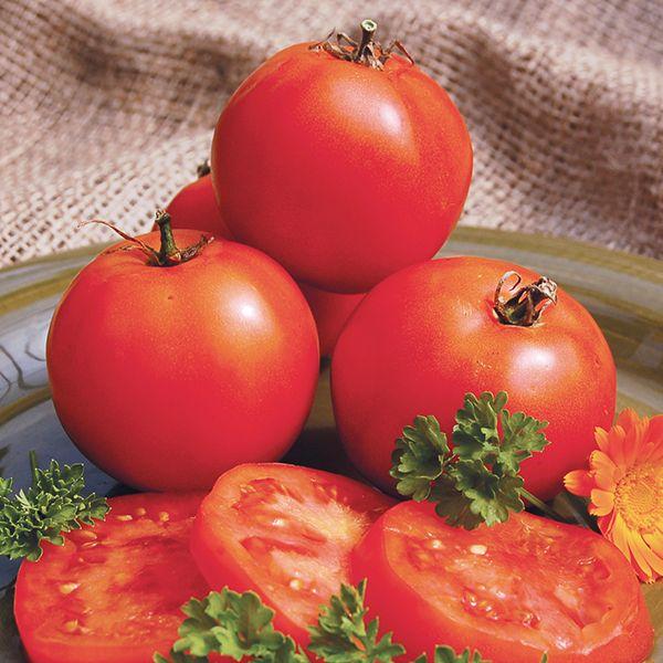 mountain princess tomato