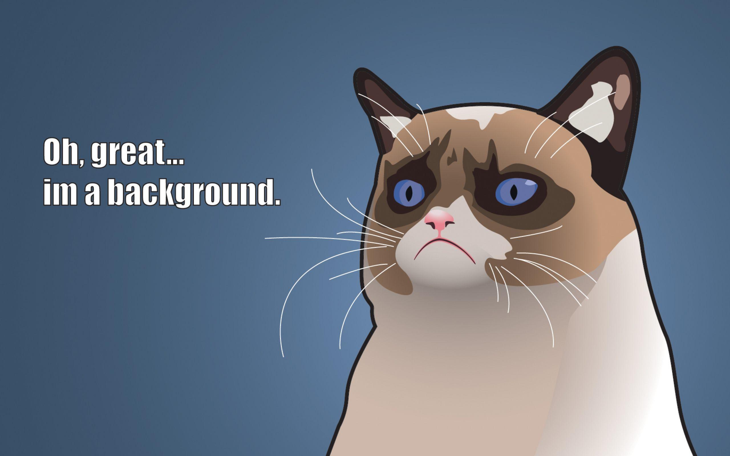 funny cat wallpaper - hd wallpapers