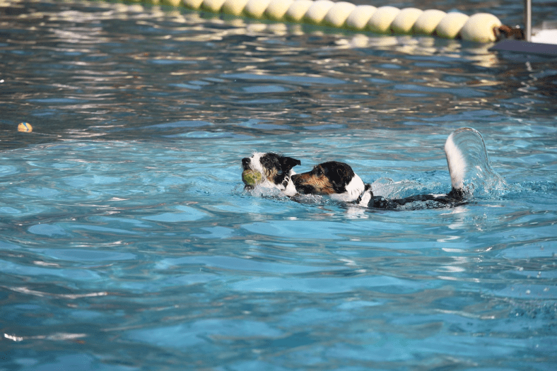 Arrangements you can't Ignore for a Dog Pool Party
