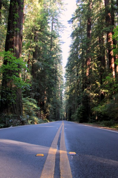 Heading north on the Avenue of Giants.