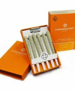 Canndescent Create 310 .5g Pre-roll 6 Pack