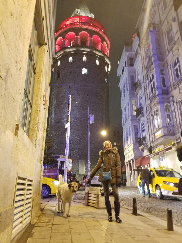 Istanbul Itinerary: dog