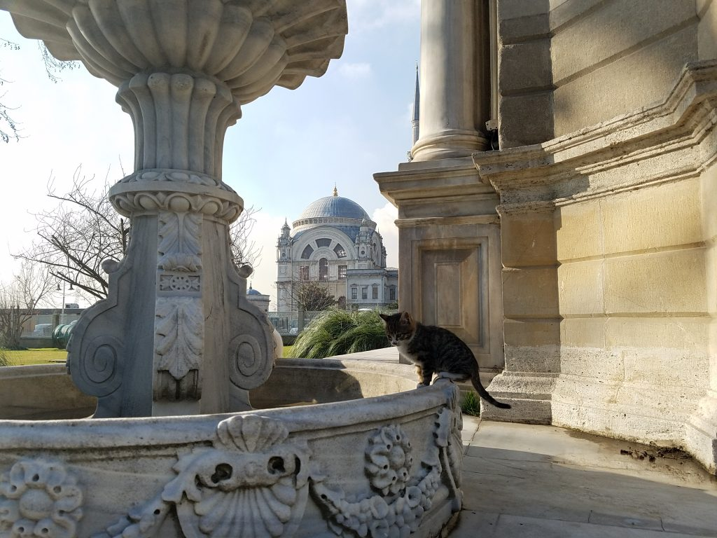 Istanbul Itinerary: Cat