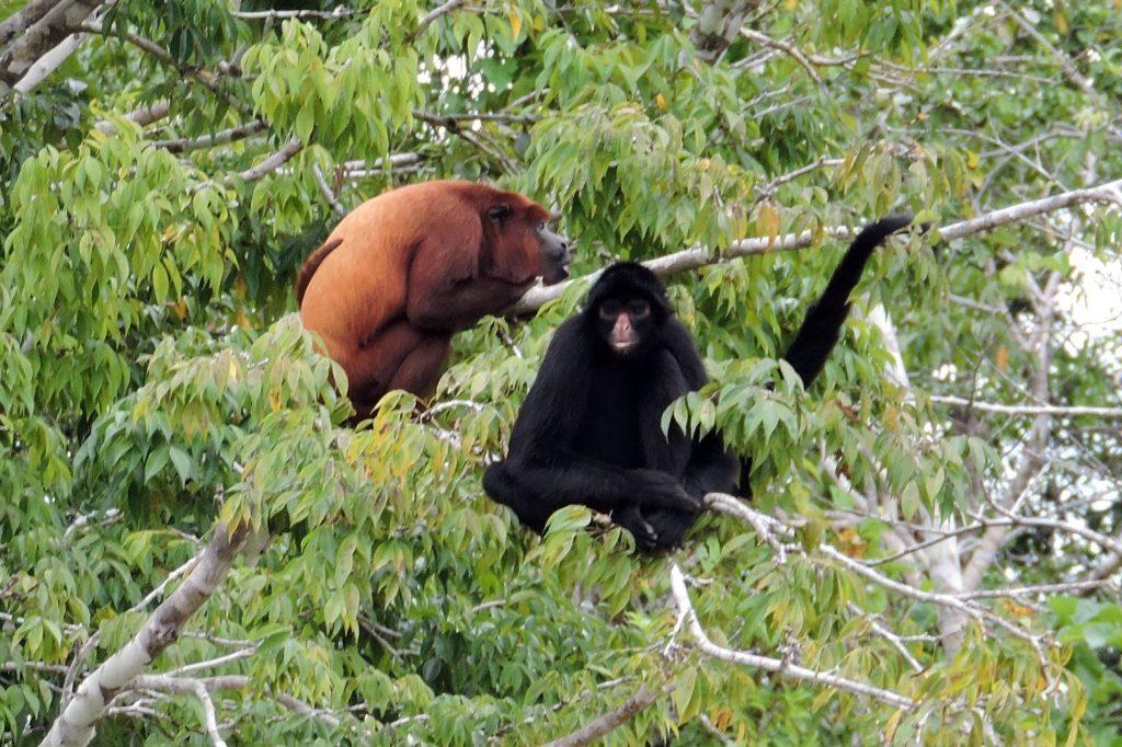 Peru Itinerary: Amazon Jungle