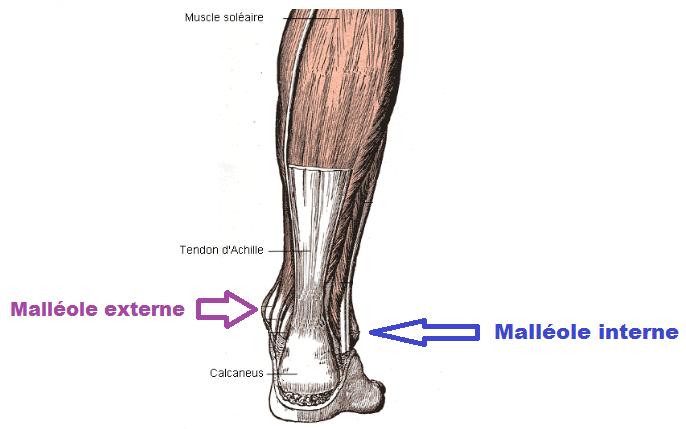 malléoles du pied