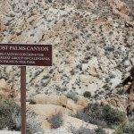 Lost Palms Canyon