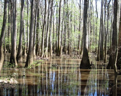 Congaree - From the boardwalk