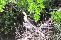 Darlingrefuge-anhinga