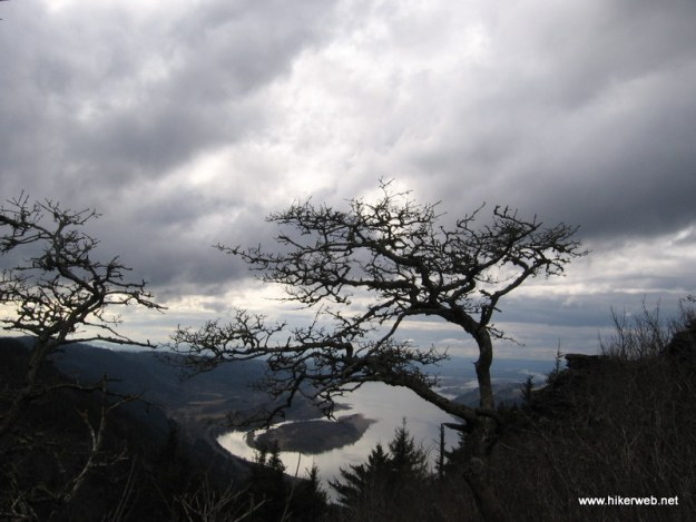 (9) Windblown tree
