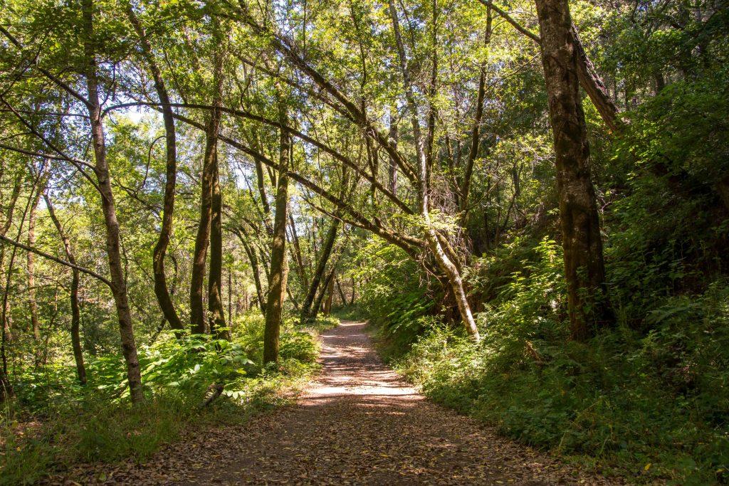 Gary Giacomini Open Space Preserve   Hike then Wine