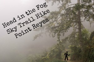 Head in the Fog - Sky Trail Hike @ Point Reyes | Hike Then Wine