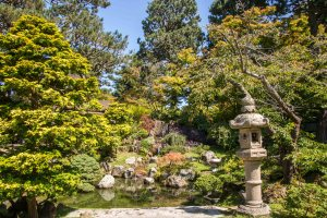 SF Botanical Garden and Japanese Tea Garden | Hike Then Wine