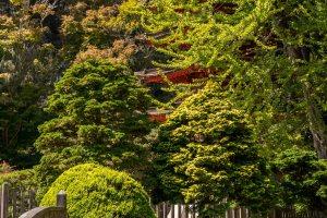 SF Botanical Garden and Japanese Tea Garden | Hike Then Wine