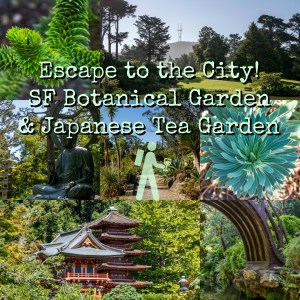 Escape to the City! – SF Botanical Garden and Japanese Tea Garden