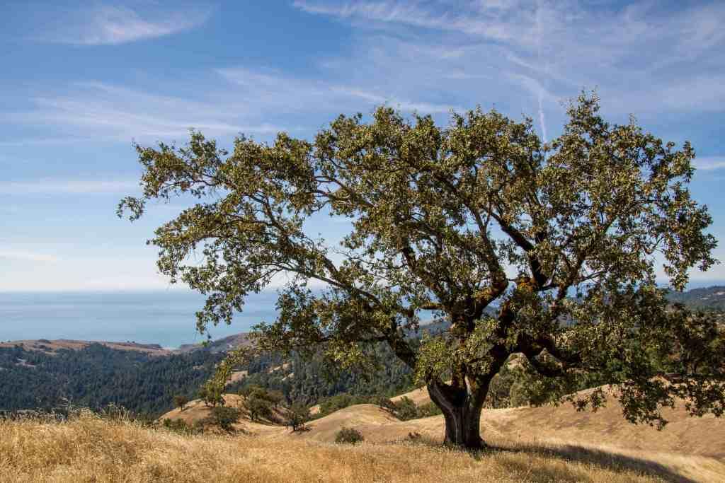 Pole Mountain - Sonoma Coast   Hike Then Wine