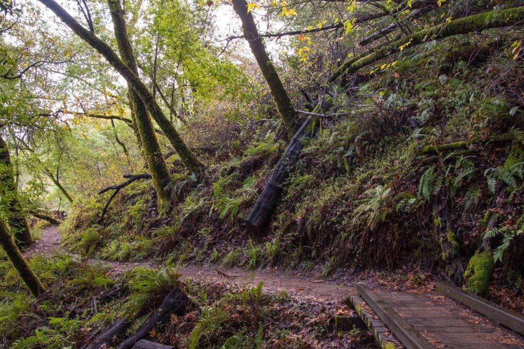 Fall Foliage at Phoenix Lake - Marin | Hike Then Wine