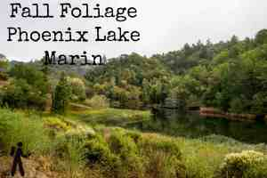 Fall Foliage at Phoenix Lake - Marin | Hike Then Wine