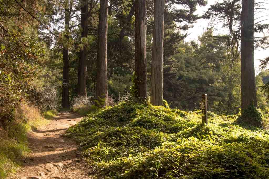 Joaquin Miller Park - Oakland | Hike Then Wine