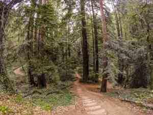 Dodging Mountain Bikers at Joaquin Miller Park – Oakland