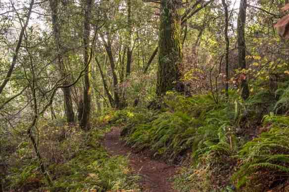 Where's the Pomo Canyon Waterfall? - Sonoma Coast | Hike then Wine