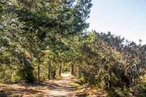 Purisma Creek Redwoods Preserve Adventure - South Bay   Hike Then Wine