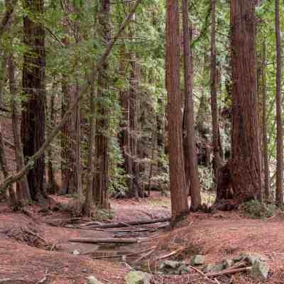 Roy's Redwoods Preserve – Marin