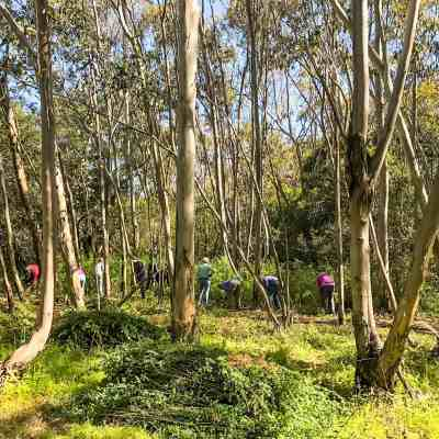 Earth Day Volunteer Day at Jack London SP – Sonoma County