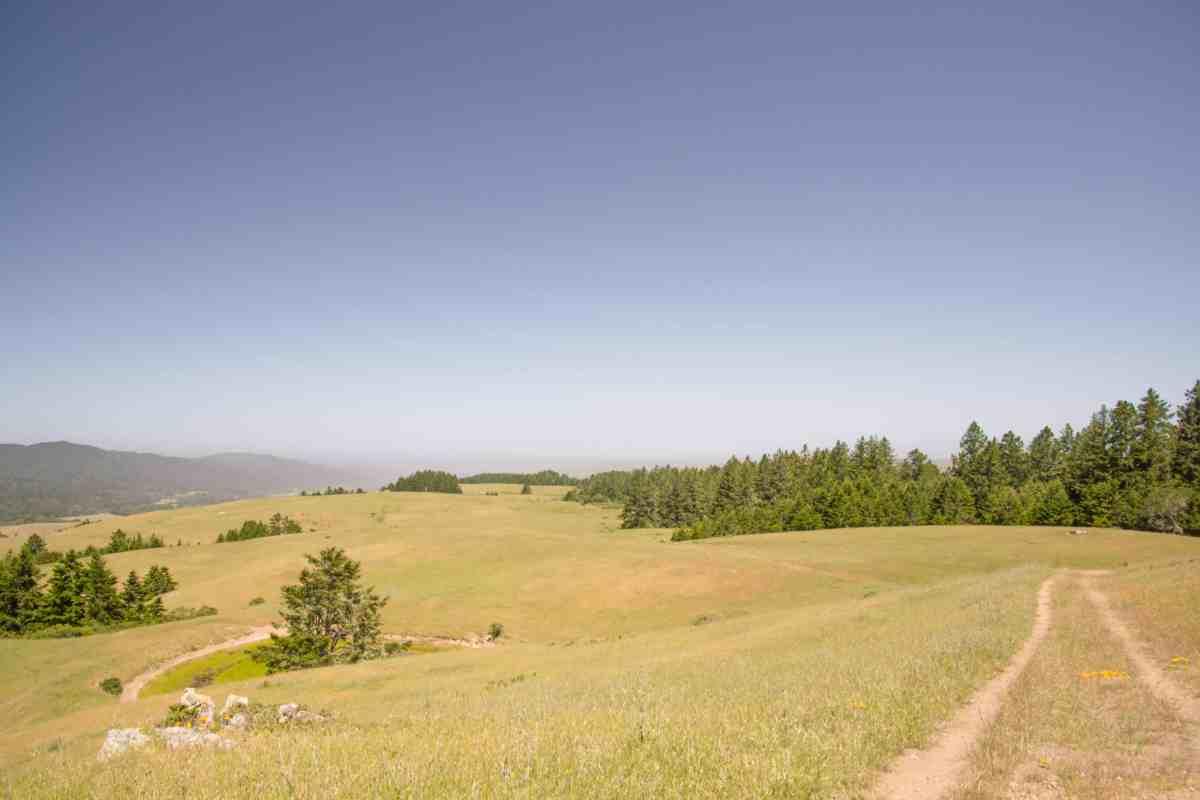Bolinas Ridge - Marin