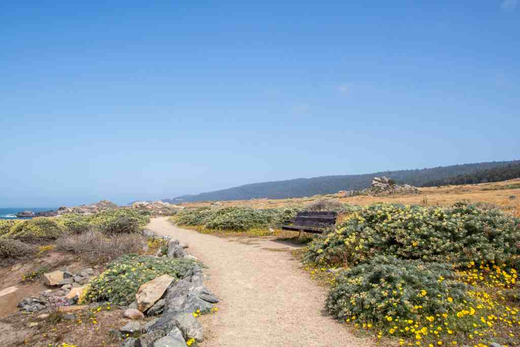 Tide Pooling at Gerstle Cove Reserve - Sonoma County | Hike Then Wine