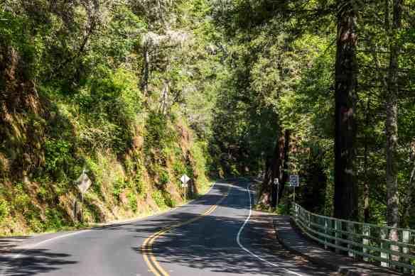 Bolinas Ridge - Marin | Hike Then Wine