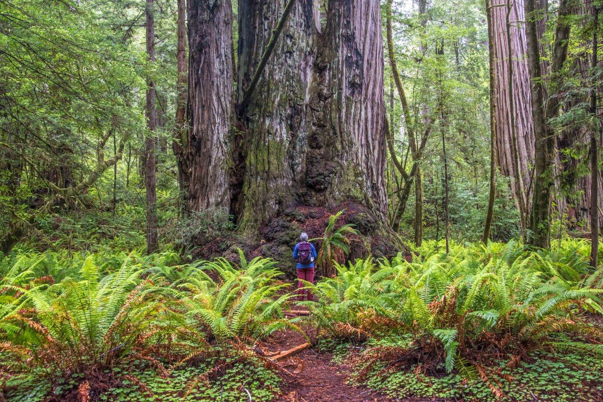 Redwood National Park - Humboldt County