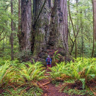 Redwood National Park – Humboldt County