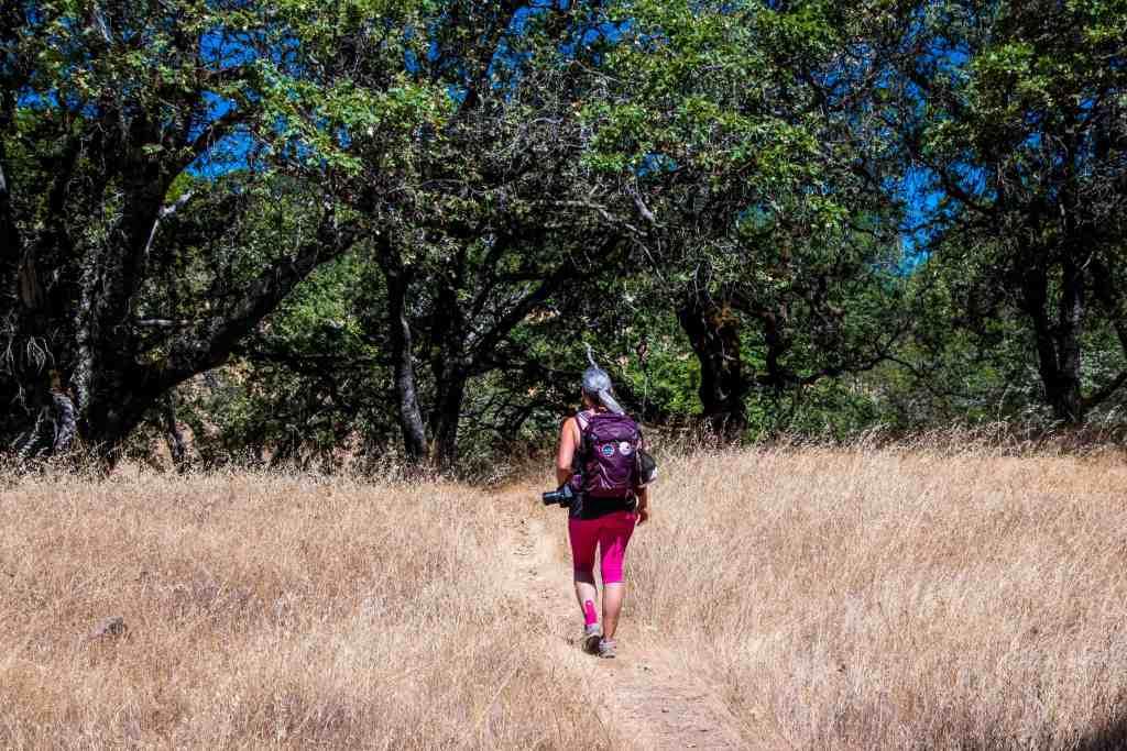 Sonoma Ridge Trail - Jack London SHP   Hike Then Wine