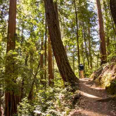 Sunset Trail in Big Basin Redwoods SP – Santa Cruz