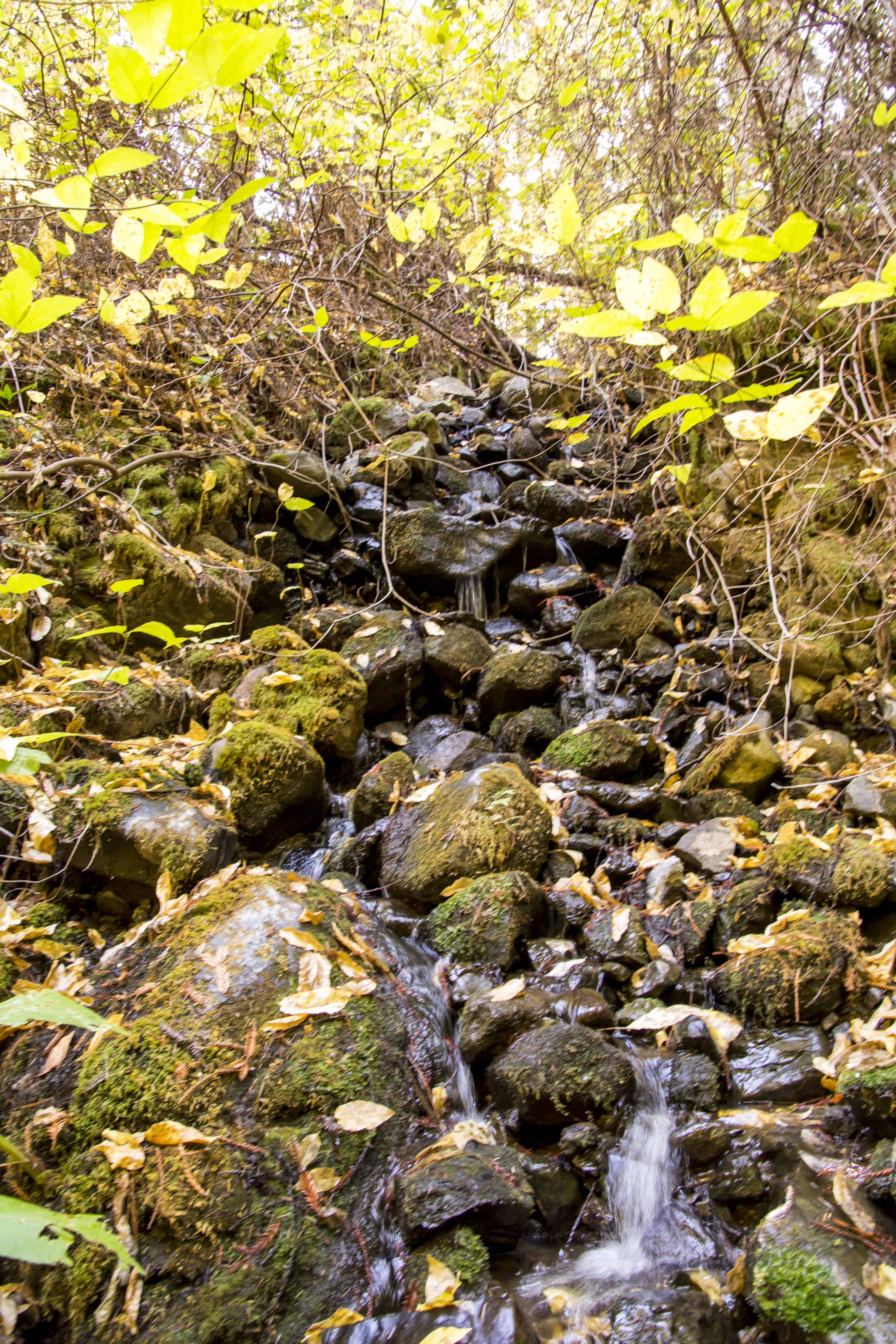 Searching for Fall in Bothe-Napa Valley State Park   Hike Then Wine