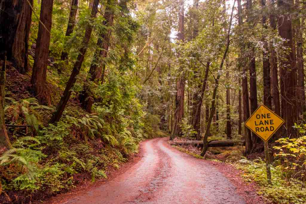 Finding Solitude in Butano State Park | Hike Then Wine