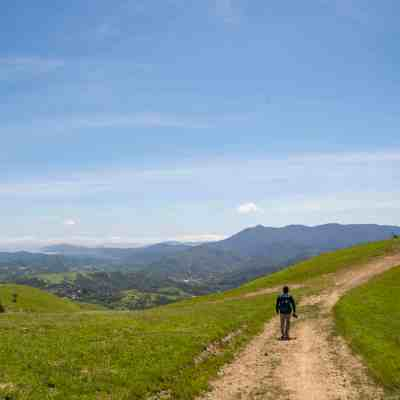 Wildflowers and Green Hills in Lucas Valley – Marin