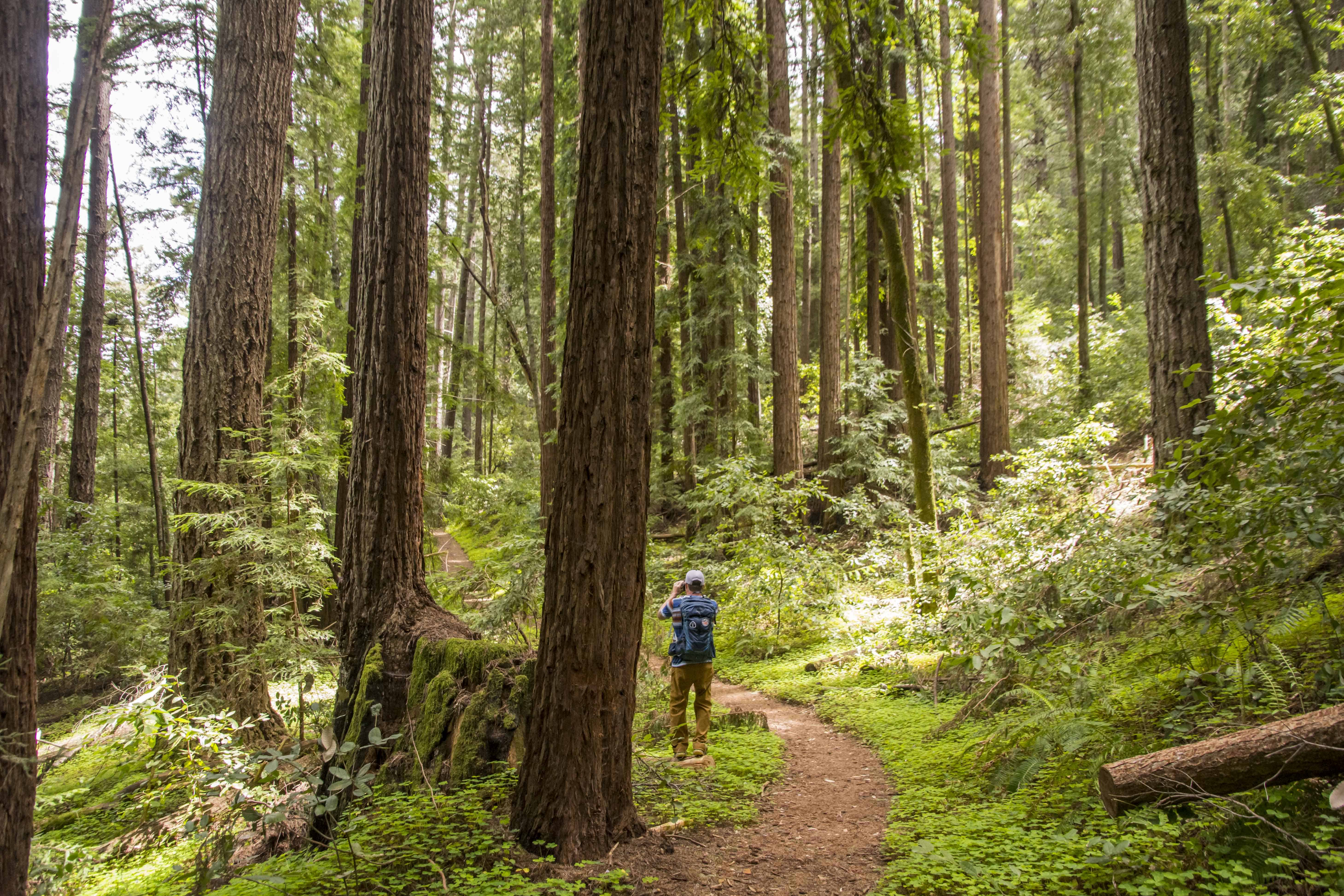A Time to Recharge in Henry Cowell Redwoods SP - Fall Creek Unit | Hike Then Wine