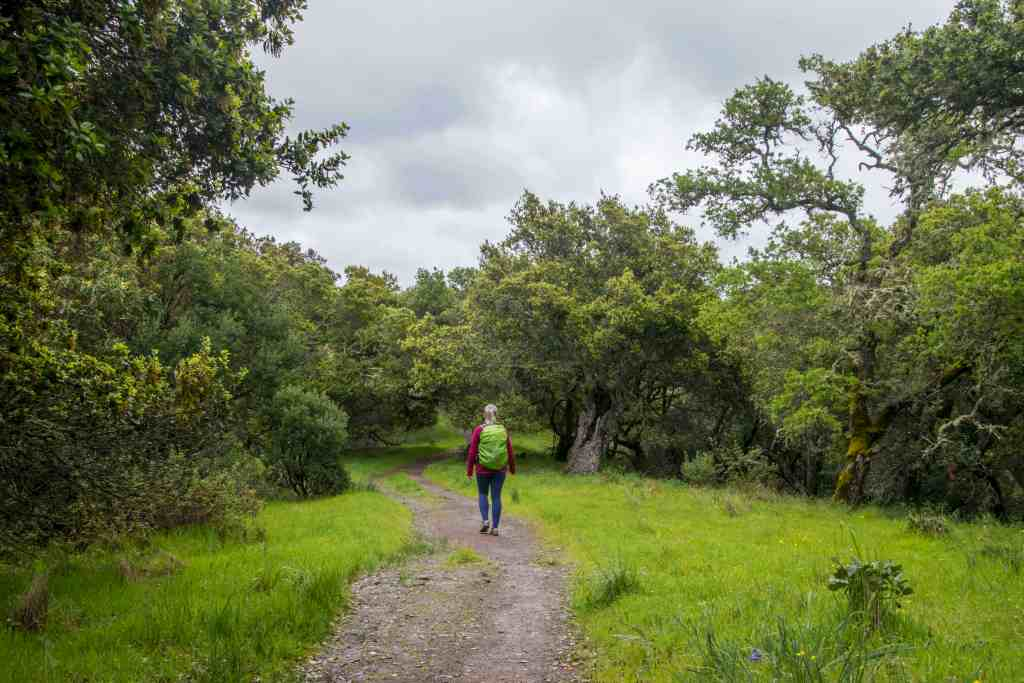 Indian Valley Open Space Preserve Waterfall Hunting – Marin | Hike Then Wine