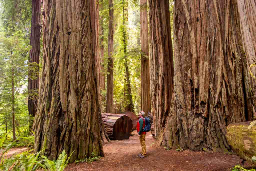 Jedediah Smith Redwoods State Park - Del Norte County   Hike Then Wine