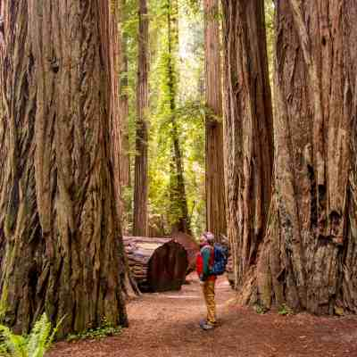 Jedediah Smith Redwoods State Park – Del Norte County