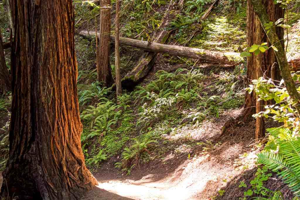 Kick-Your-Bootyjack Trail to Muir Woods - Marin | Hike Then wine