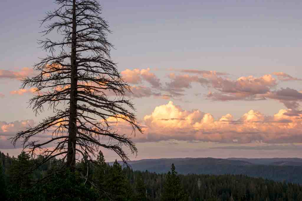 Camping with Giant Sequoias at Calaveras Big Trees State Park | Hike Then Wine