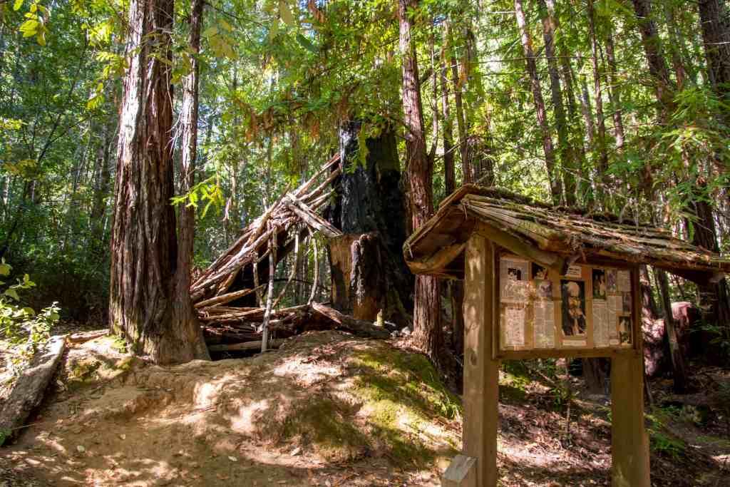 Gentle Giants in Hendy Woods - Mendocino | Hike Then Wine