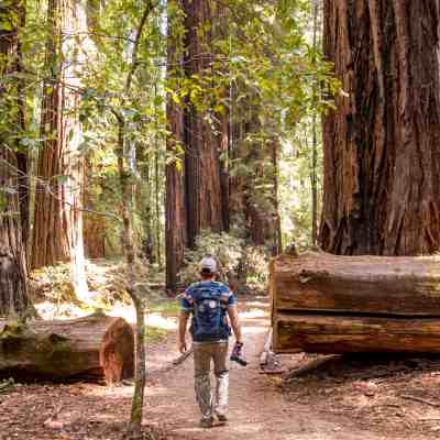 Gentle Giants in Hendy Woods – Mendocino