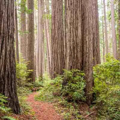 Prairie Creek Redwoods State Park – Humboldt County