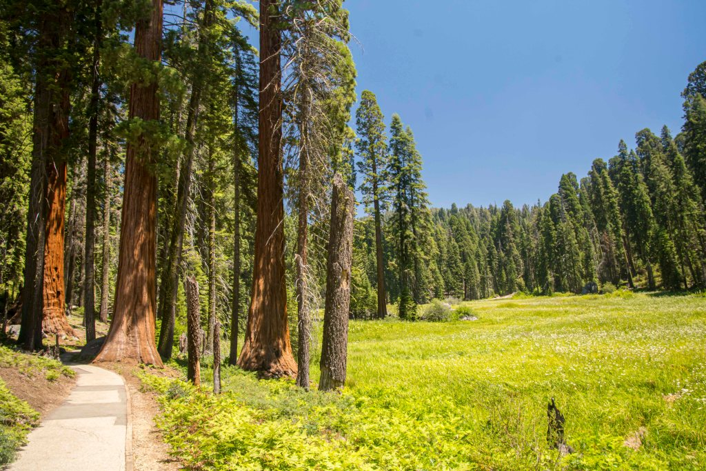 crescent meadow trail