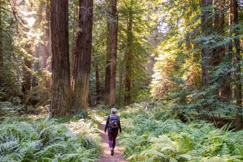 dawna walking through the ferns on big tree trail mendocino woodlands