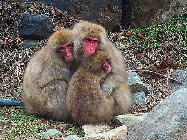 Huddling monkeys