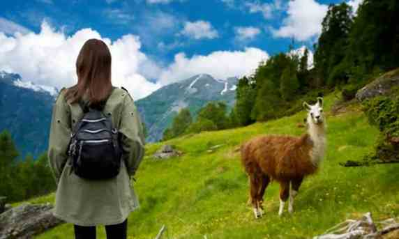 llama hiking by hikingpirates